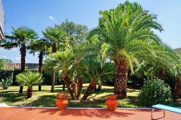 Giardino con le palme for Avvolgere completamente intorno case di log portico